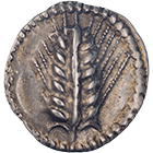 Southern Italy, Lucania, Metapontum, Trite (obverse)