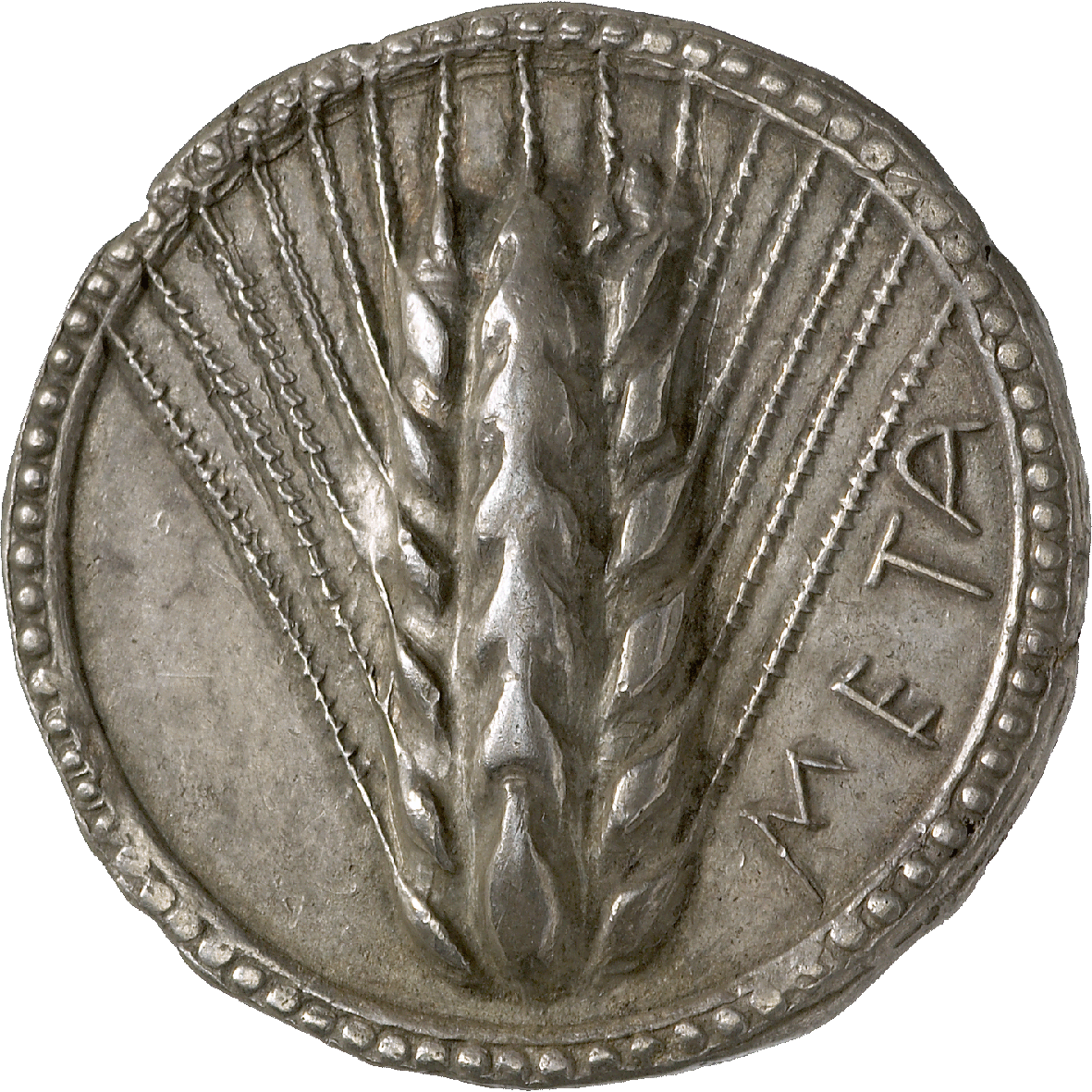 Southern Italy, Lucania, Metapontum, Nomos (obverse)